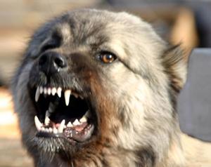 Собаки в Щелково