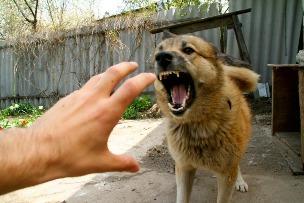 Злые собаки в Щелково